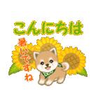 よちよち豆柴 優しい夏(個別スタンプ:4)