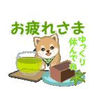 よちよち豆柴 優しい夏(個別スタンプ:9)