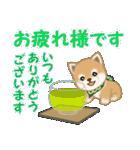 よちよち豆柴 優しい夏(個別スタンプ:10)