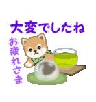 よちよち豆柴 優しい夏(個別スタンプ:12)