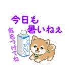 よちよち豆柴 優しい夏(個別スタンプ:18)