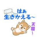 よちよち豆柴 優しい夏(個別スタンプ:20)