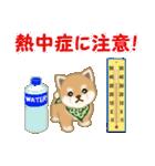 よちよち豆柴 優しい夏(個別スタンプ:25)