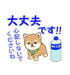 よちよち豆柴 優しい夏(個別スタンプ:30)