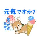 よちよち豆柴 優しい夏(個別スタンプ:31)