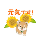 よちよち豆柴 優しい夏(個別スタンプ:32)