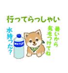 よちよち豆柴 優しい夏(個別スタンプ:37)