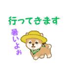 よちよち豆柴 優しい夏(個別スタンプ:38)
