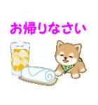 よちよち豆柴 優しい夏(個別スタンプ:40)