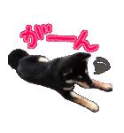 柴犬じゃない♡ ぎんの使えるスタンプ2(個別スタンプ:10)