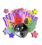 柴犬じゃない♡ ぎんの使えるスタンプ2(個別スタンプ:24)