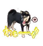 柴犬じゃない♡ ぎんの使えるスタンプ2(個別スタンプ:28)
