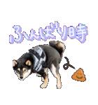 柴犬じゃない♡ ぎんの使えるスタンプ2(個別スタンプ:33)