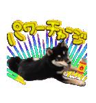 柴犬じゃない♡ ぎんの使えるスタンプ2(個別スタンプ:37)