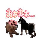 柴犬じゃない♡ ぎんの使えるスタンプ2(個別スタンプ:39)