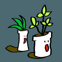 植物と植木ばち
