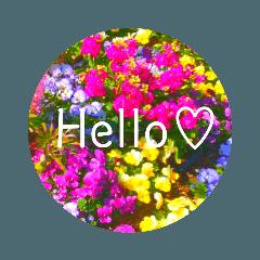 flower♡コロナに負けないスタンプ!!