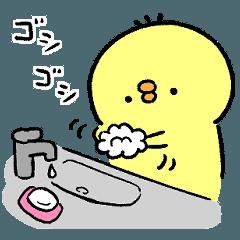 ゆーすけひよこ ひよ活3