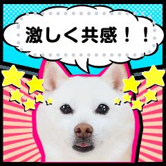 豆柴大福メッセージスタンプ【アメコミ風】