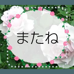 薔薇のメッセージスタンプ