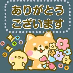 豆柴日和♡メッセージ