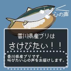 [LINEスタンプ] 香川県産ブリはさけびたい!メッセージ