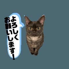 猫のタピオカ