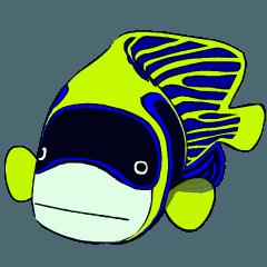 ばきばき泳ぐ熱帯魚 タテキン親子