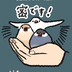 文鳥スタンプ9 〜対コロナウイルス