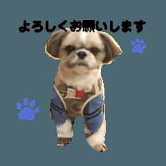 シーズー犬 空ちゃんと明ちゃんの日記1