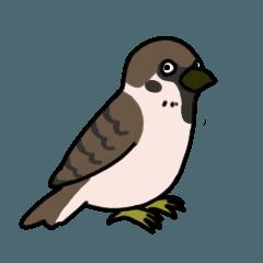 多種多様な鳥