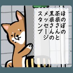 ほのぼの柴犬さんのメッセージスタンプ