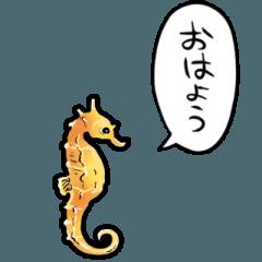しゃべるタツノオトシゴ