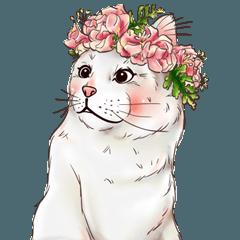 """""""ティッシュ"""" かわいい猫 2."""