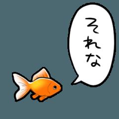しゃべるよ金魚