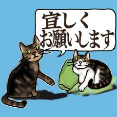 うちのねこ達【ふきだし敬語】