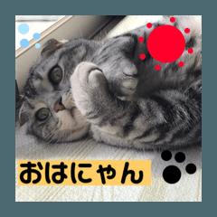 リアル猫パート3