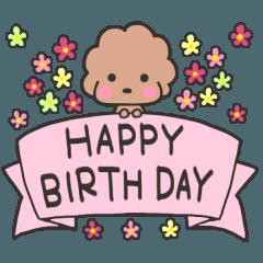 [LINEスタンプ] トイプードルのビビ♡お誕生日・お祝い♡