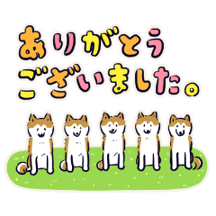 Every Day Dog しば犬 2020
