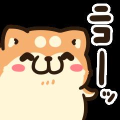 動くボンレス犬とボンレス猫2