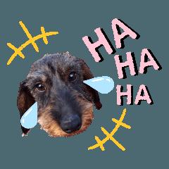 うちの子シリーズ『犬のレオくん』