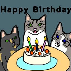 うちの3匹の誕生日祝い