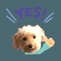 うちの子シリーズ『犬のヴァルスくん』
