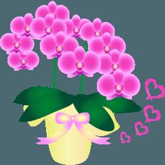 [LINEスタンプ] 動く♪ランランお花を贈ろう