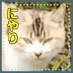 【長文OK】猫(ねこ)メッセージ