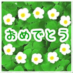 ずっと使える花のお祝い☆誕生日☆イベント