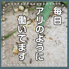 【長文OK】働きアリ(実写)