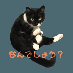 我が家の猫/エヴァ(基本)