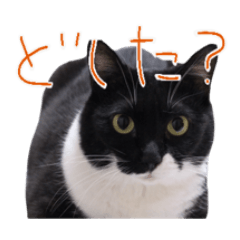 我が家の猫/エヴァ(質問)