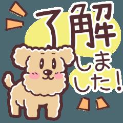 [LINEスタンプ] トイプー大好きスタンプ ◆ あいさつ